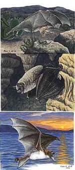 Fiona Reid Design Cards - Product Image