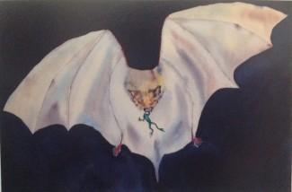 Bat Frog Card - Product Image