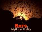 Bat Conservation International E-Publications