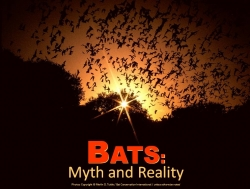 Bats: Myth & Reality e-Download - Product Image