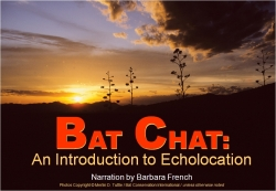 Bat Chat e-Download - Product Image