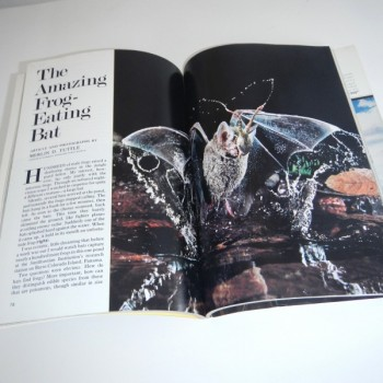 National Geographic January 1982,  Tuttle Article