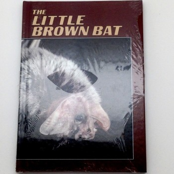 The Little Brown Bat - Product Image