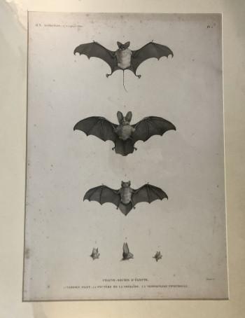 Antique PrintX - Product Image