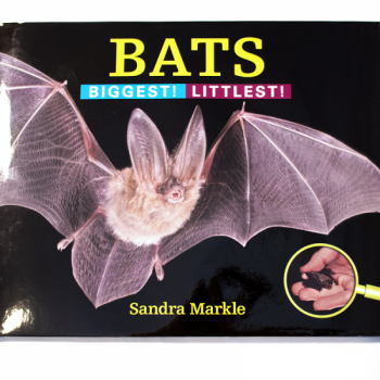 Bats - Biggest!  Littlest! - Product Image