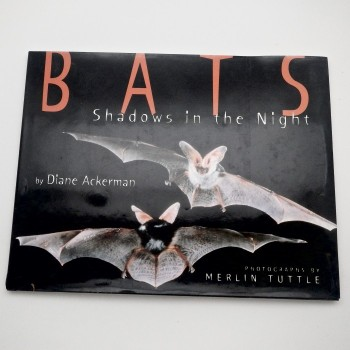 Bats Shadows in the Night - Product Image