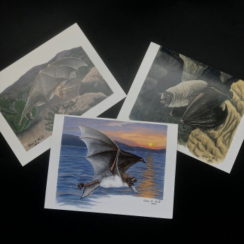 Fiona Reid Bat Art Note Cards Original Set - Product Image