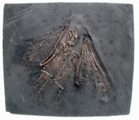 Fossil Bat Skeleton Casting - Paleochiropterix tupainodon, Messel bat, medium - Product Image