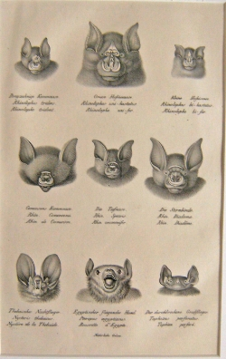 Nine Faces II - Product Image