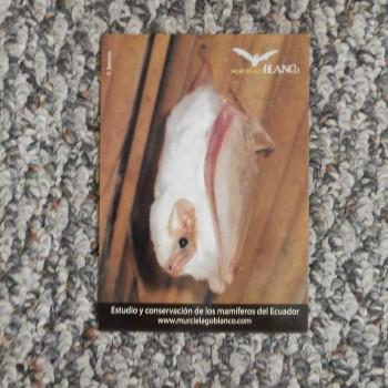 Postcard Mucielago Blanco - Product Image