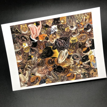 "Premium ""Many Faces Of Bats"" 5x7 Note Cards - Product Image"