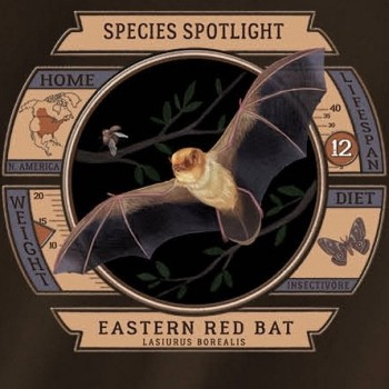 Species Spotlight Tee Shirt - Eastern Red Bat - Product Image