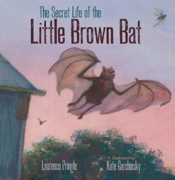 The Secret Life of the Little Brown Bat - Product Image